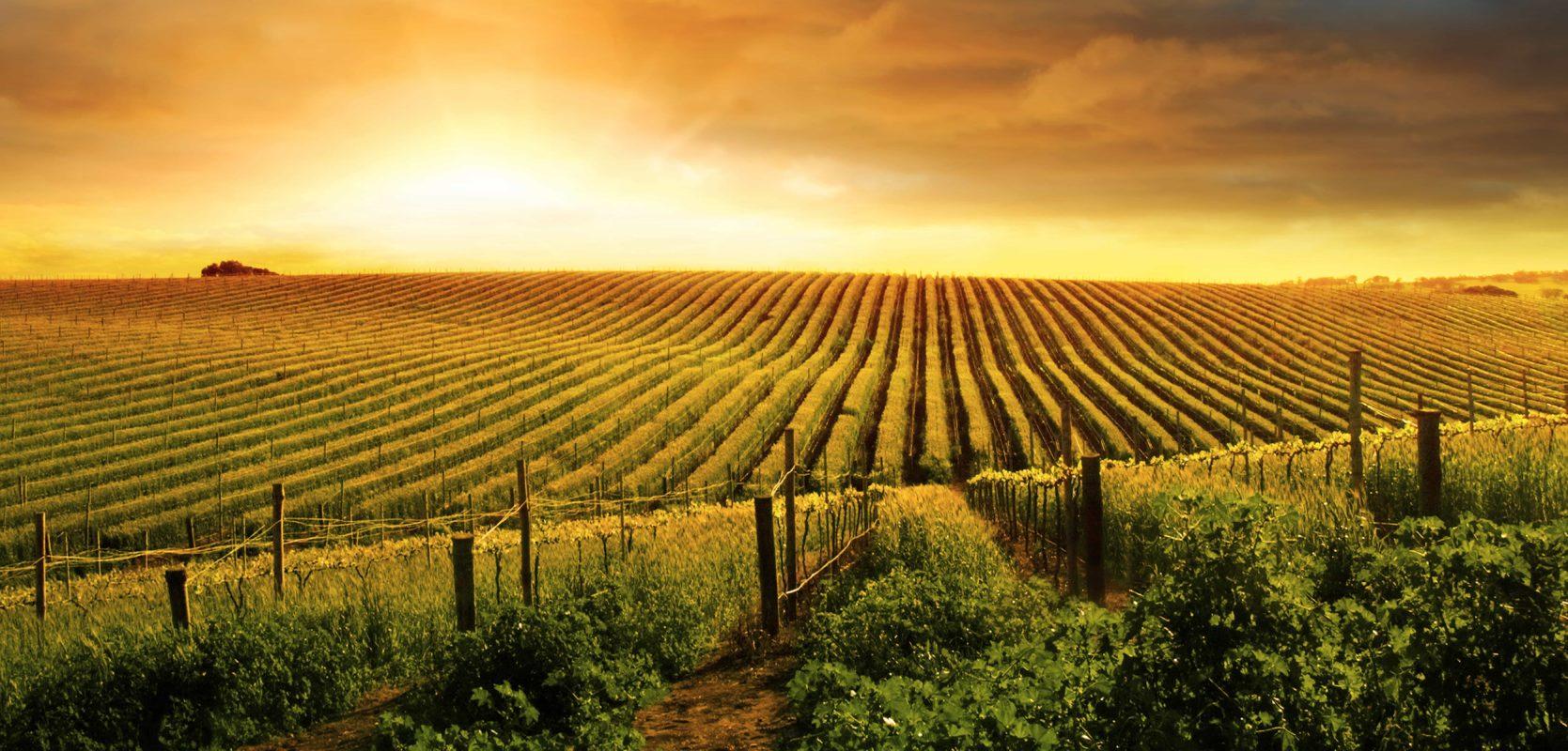Shutterstock 129868538 (für Regionen, Champagne)